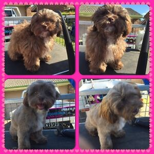 Dog Grooming by Katie Snelson  0 Capalaba Brisbane South East Preview