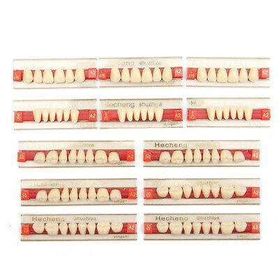 3set Acrylic Resin Denture Teeth Color A2 Upper Lower Shade Modern Dental Useful