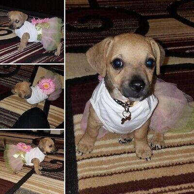 Sunflower Pet Dog Dress Summer Pink Princess Flower Baby Girl Apparel Costume SP - Baby Dog Costumes