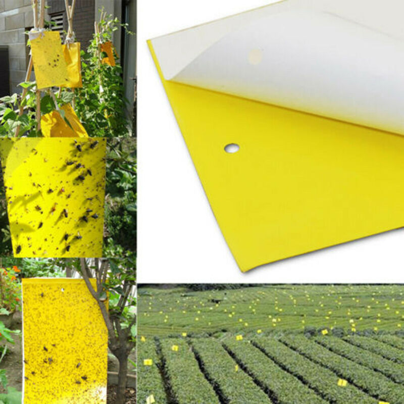 20/40/100 Pcs Sticky Fly Trap Paper Yellow Traps Fruit Flies