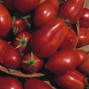 Tomato - San Marzano 3 - Italian Plum - 200 seeds  - Vegetable