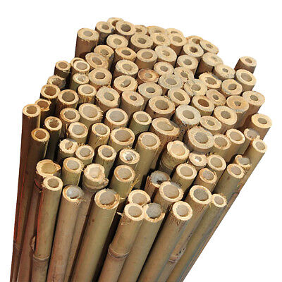 8ft Good Quality Strong Bamboo Garden Canes Pack of 100