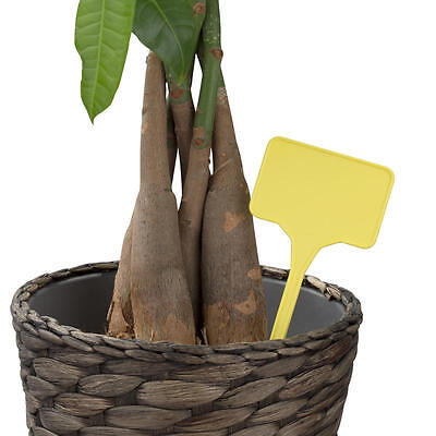 Price Label Spears Pack of 10 Price Spears Ideal for Garden Centres