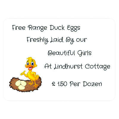 180 Duck Eggs For Sale Labels Goslings quail eggs incubator chick feed coop box