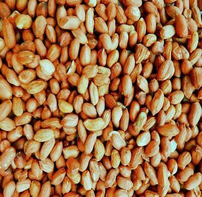 1.5 KG Premium Grade Peanuts, Wild Bird Seed, Fast Shipping.Wild Bird Food,