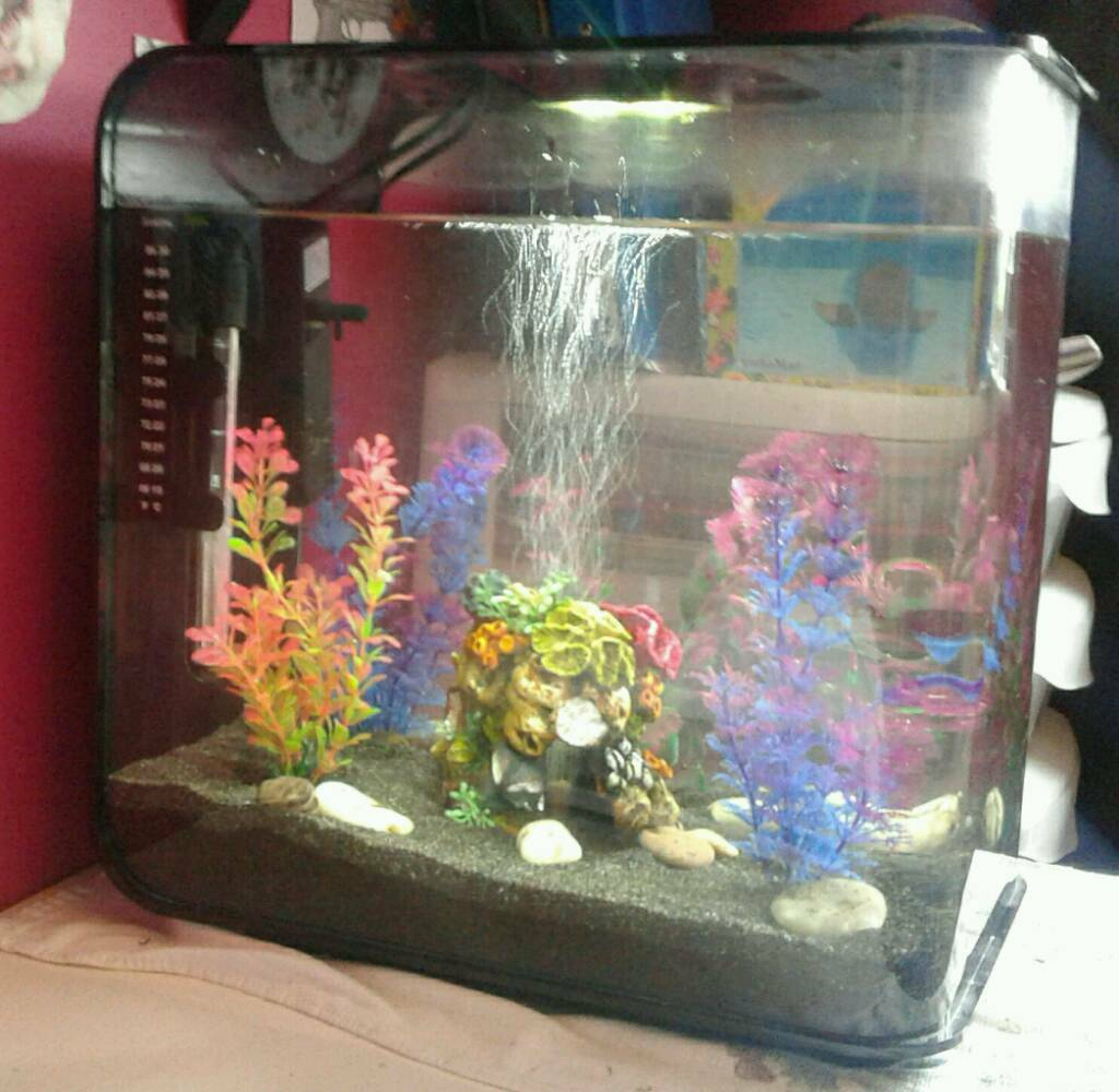 fish tank biorb flow 30 litre in blaydon on tyne tyne. Black Bedroom Furniture Sets. Home Design Ideas