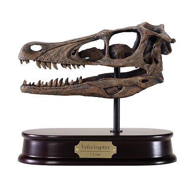 Velociraptor Dinosaur Skull Model Replica 1:1 Scale DinoStoreus