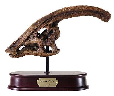 Parasaurolophus Dinosaur Skull Model Replica 1:4 Scale DinoStoreus
