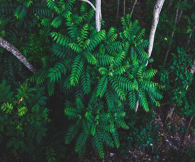 Vinyl Studio Backdrop Photo Background Prop 10X8FT Green Forest Jungle Wood Tree