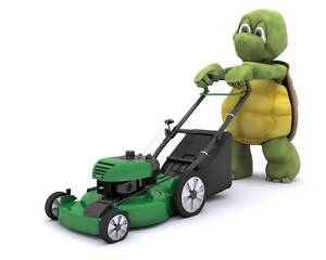 Turtle Garden & Handyman Service Nelson Bay Port Stephens Area Preview