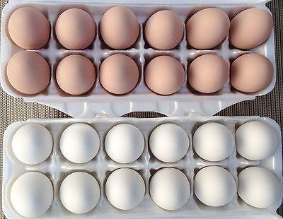 1 Doz Ceramic Fake Chicken Nesting Eggs White - Mexas Farms Pro
