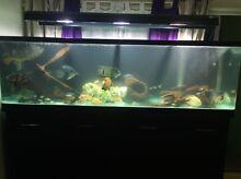 Amazing fish for sale!!! Carlton Melbourne City Preview