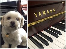 We will donate $100 to the AWL for every Piano sale! Norwood Norwood Area Preview