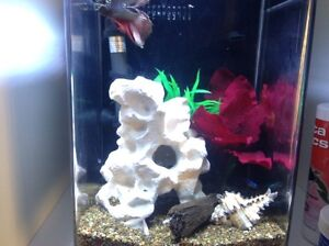 Fish tank with heater and filter and accesories North Melbourne Melbourne City Preview