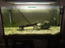COMPLETE FISH TANK FOR SALE Narre Warren Casey Area Preview