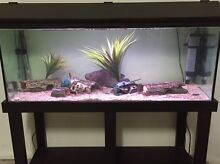 4ft Fish tank (good working condition) - negotiable Springfield Lakes Ipswich City Preview