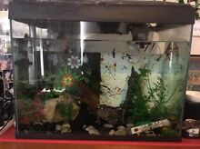 70L Fish Tank with fish and accessories Amaroo Gungahlin Area Preview