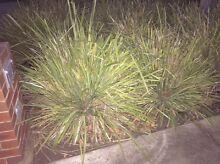 Plants free Ballarat Central Ballarat City Preview