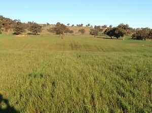Wanted Land for lease Marrar Coolamon Area Preview
