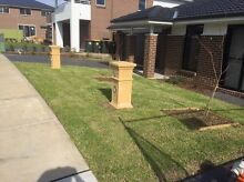 Sir Walter Buffalo Turf and Lawn Mowing Service Eastwood Ryde Area Preview