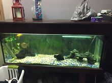 4 foot Fisk tank complete set up Mitcham Whitehorse Area Preview