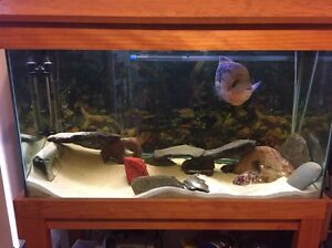 3ft Fish Tank, Stand, Pump and accesssories Googong Queanbeyan Area Preview