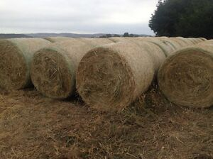 Oaten hay & silage for sale Bathurst Bathurst City Preview