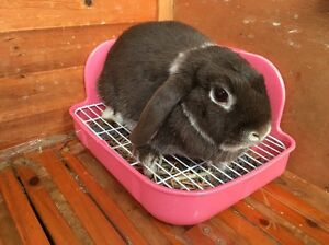 Rabbits Toilet 2nd Hand Bentleigh East Glen Eira Area Preview