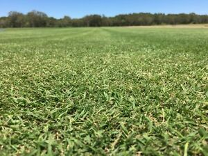 Turf for sale open 7 days a week over Christmas holidays Aroona Caloundra Area Preview