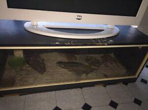 Snake tank Ardeer Brimbank Area Preview