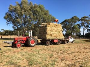 Oaten Hay - from $4 per bale Penfield Gardens Playford Area Preview