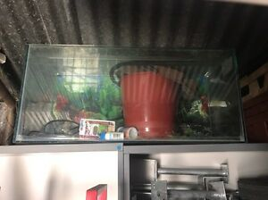 Fish tank, water filter, fish food, aquarium,  tank plants Morphett Vale Morphett Vale Area Preview