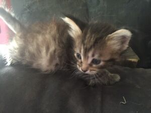 2 kittens, 1 male, 1 female Muswellbrook Muswellbrook Area Preview