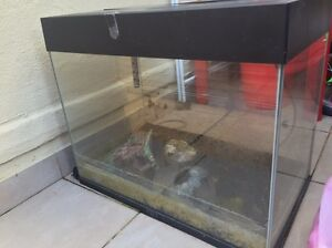 FISH TANK & STAND Revesby Bankstown Area Preview