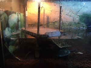 6ft fish tank and turtles Hoddles Creek Yarra Ranges Preview