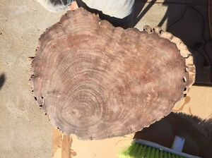 Spotted gum chopping boards Beresfield Newcastle Area Preview
