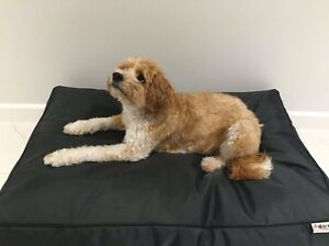 Dog Beds Aitkenvale Townsville City Preview