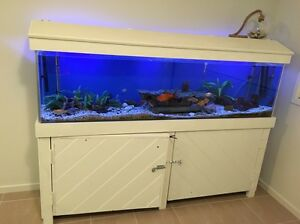 6 foot fish tank East Maitland Maitland Area Preview