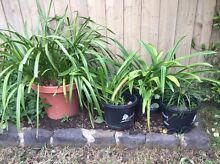 ORCHIDS !! Greensborough Banyule Area Preview