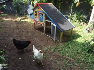 Chickens and Decorated Coop For Sale Cairns North Cairns City Preview