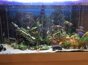 Aquarium fish tank Bardwell Valley Rockdale Area Preview