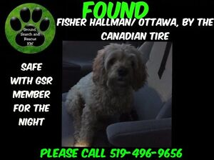 Found Dog - Kitchener