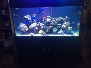 Marine reef aquarium Maroochydore Maroochydore Area Preview