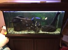 4 X 2 ft tank with accessories Maroochydore Maroochydore Area Preview