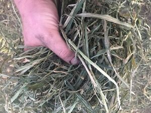 HAY AND SILAGE ROUND BALES OF LUCRENE,OATEN,SOURGHUM Hinton Port Stephens Area Preview