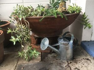 Succulent garden in huge Terracotta pot Ashgrove Brisbane North West Preview