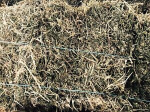 Lucerne hay for sale Warrion Colac-Otway Area Preview