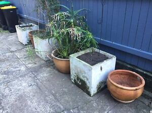 Free Pots Balgowlah Manly Area Preview