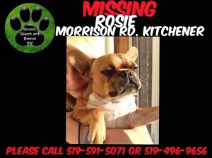 STILL MISSING  Kitchener / Waterloo Kitchener Area image 2