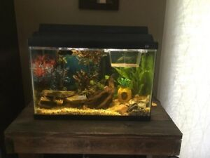 NEED GONE - Complete 20 gal setup 50$